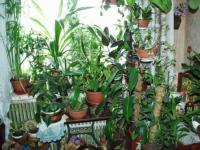 """Конспект занятия: """"Мир комнатных растений"""""""